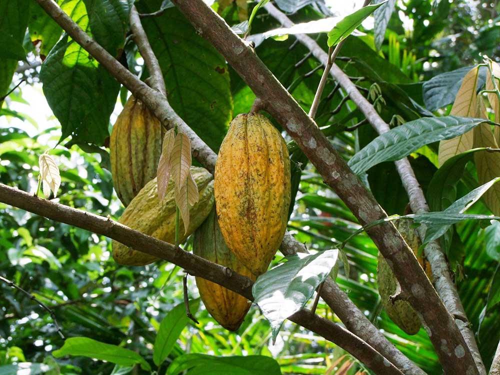 Produkte aus nachhaltigem Anbau